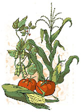 Graphic of food plants