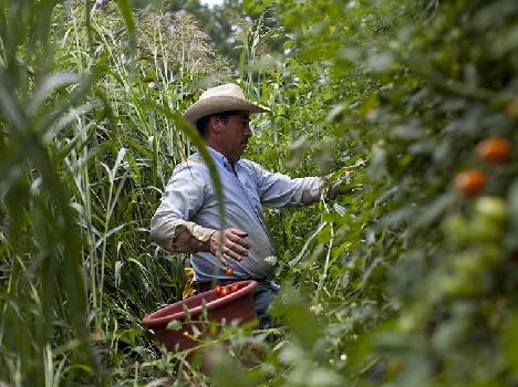 A migrant farm worker in Virginia who returns to Mexico every year on a H2A visa. (Photo by Laura Elizabeth Pohl/Bread for the World.)