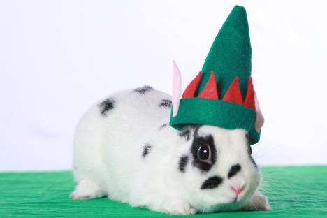 Rory the rabbit in a festive elf hat