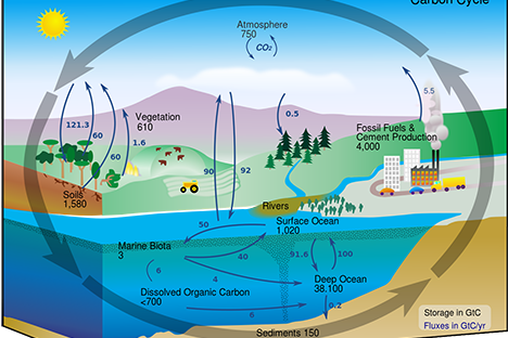 Carbon cycle and effects on the atmosphere