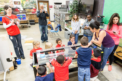 Exploring aquatic wildlife in the Hall's Animal Discovery Room