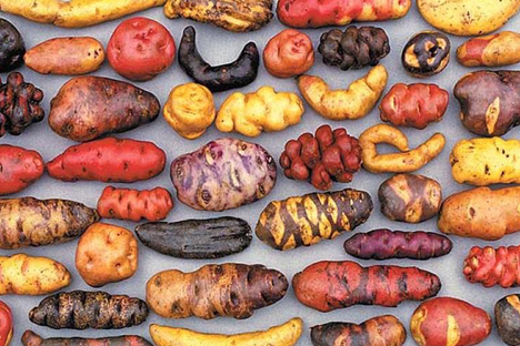 Diversity of wild potatoes