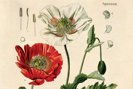 Psychoactive plants (poppy)