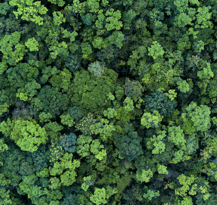 Forests from Above